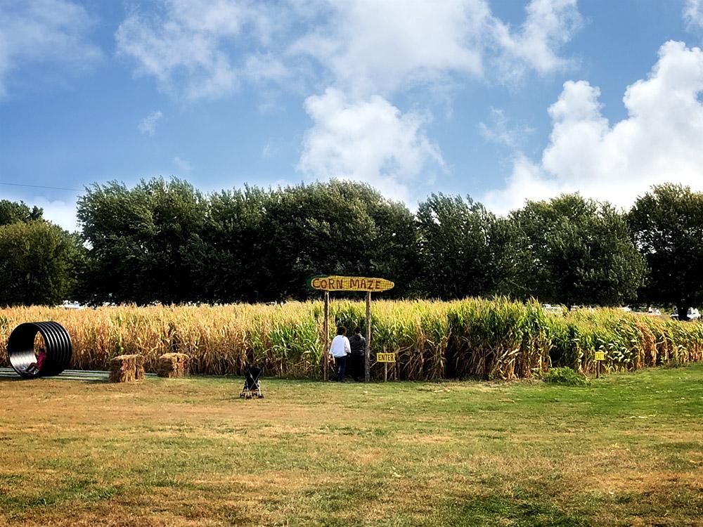 Poppys Pumpkin Patch Corn Maze