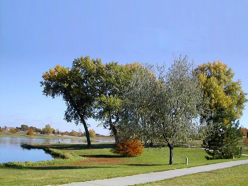 Skyview Lake trees turning colors in Norfolk, NE