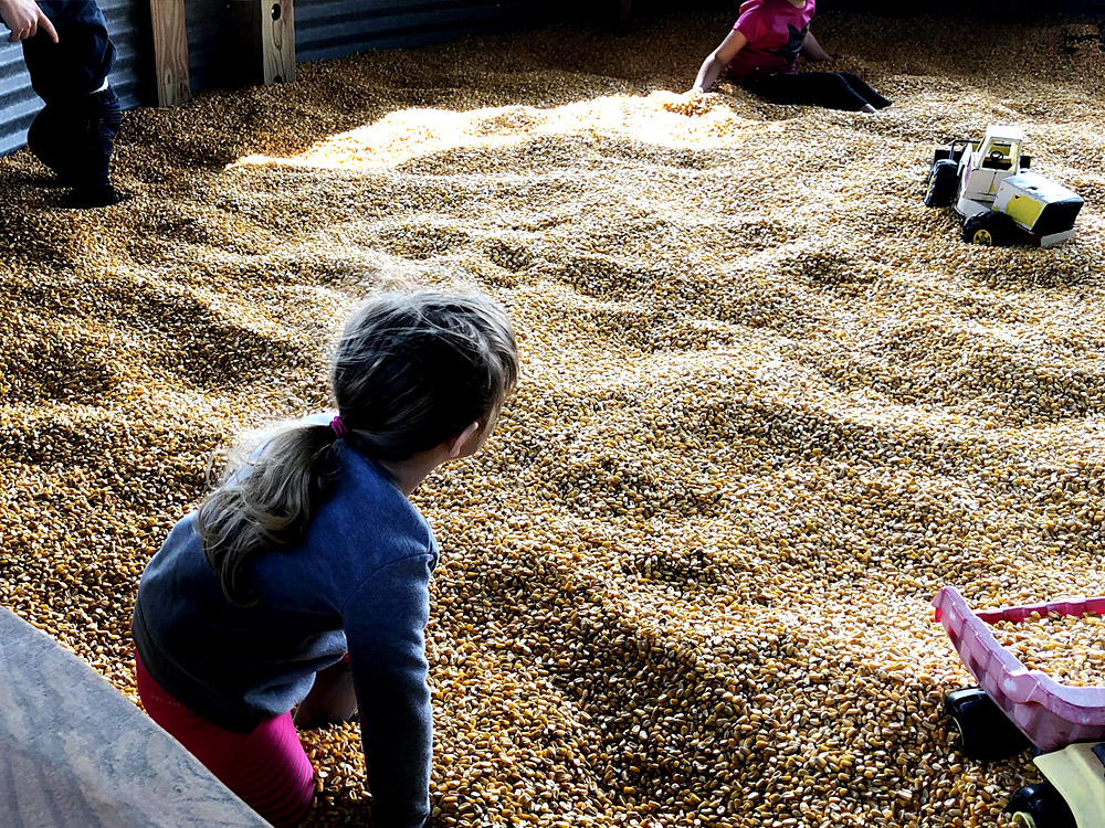 Kids play inside a corn pit at the local pumpkin patch